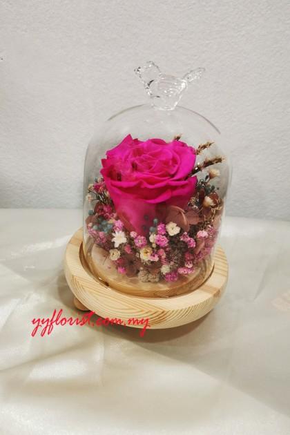 Pink Preserved Roses Bell Jar